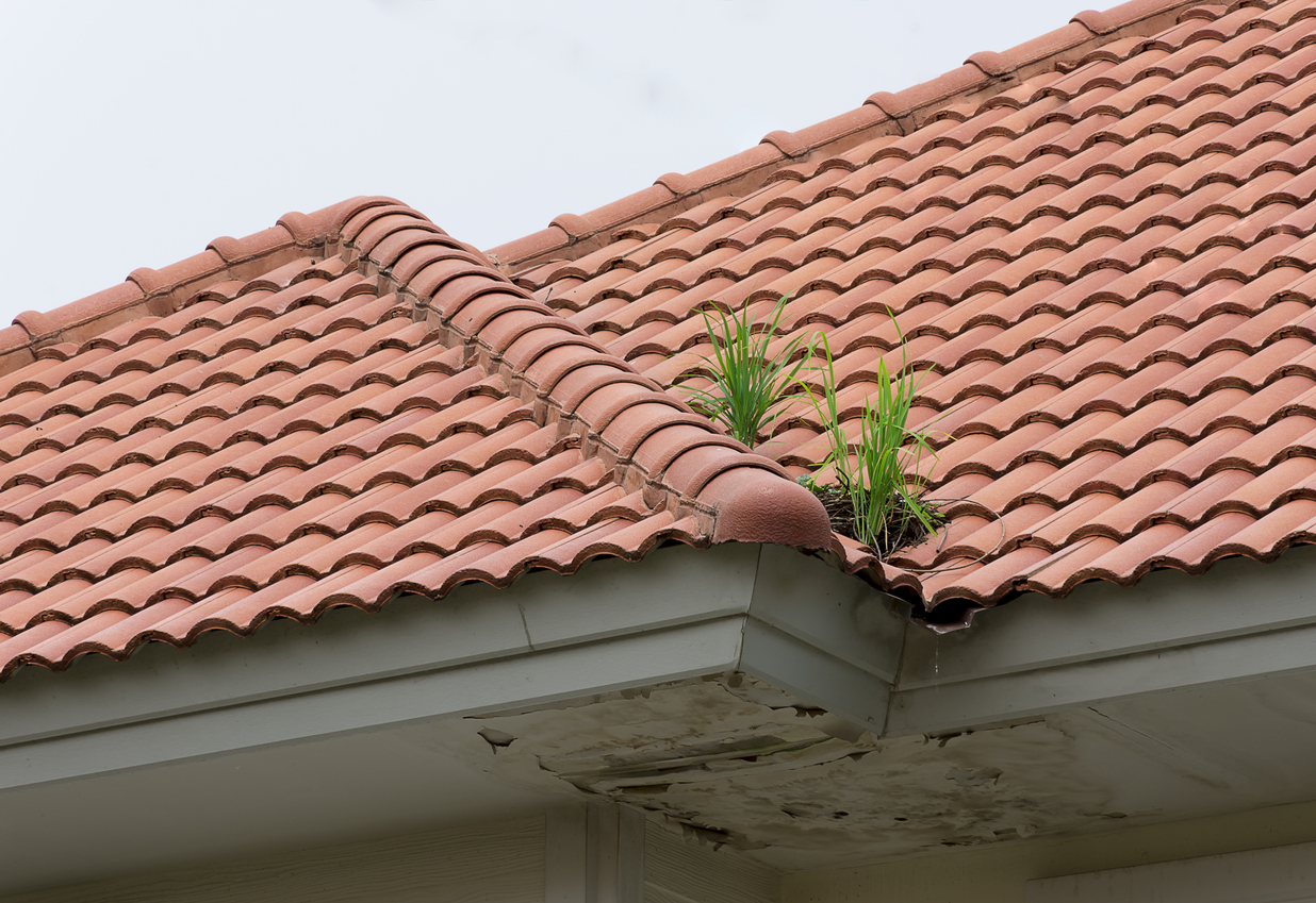 Pigeons nesting on the roof and there are grass occur. When the rain falls water flows into the grooves under the roof is not. Water flowing into the roof, resulting in dirty ceiling, wetlands.