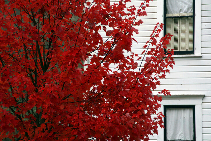 White clapboard house with autumn tree